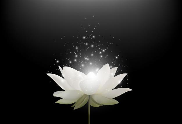 Fleur lotus blanc magique fond noir 43605 1744
